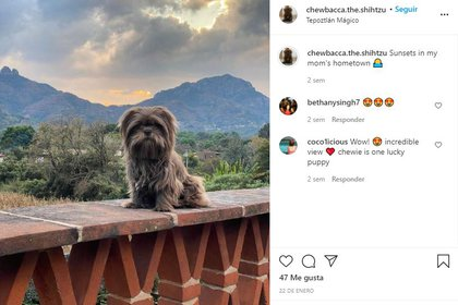 Se logró el cometido buscado por la familia de Chewy y lograron recuperar su pasaporte para volver a su hogar juntos (Foto: Instagram@/chewbacca.the.shihtzu)