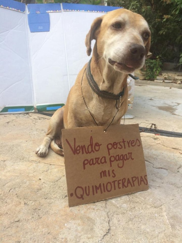 Este perrito vende postres para poder pagar su propia quimioterapia