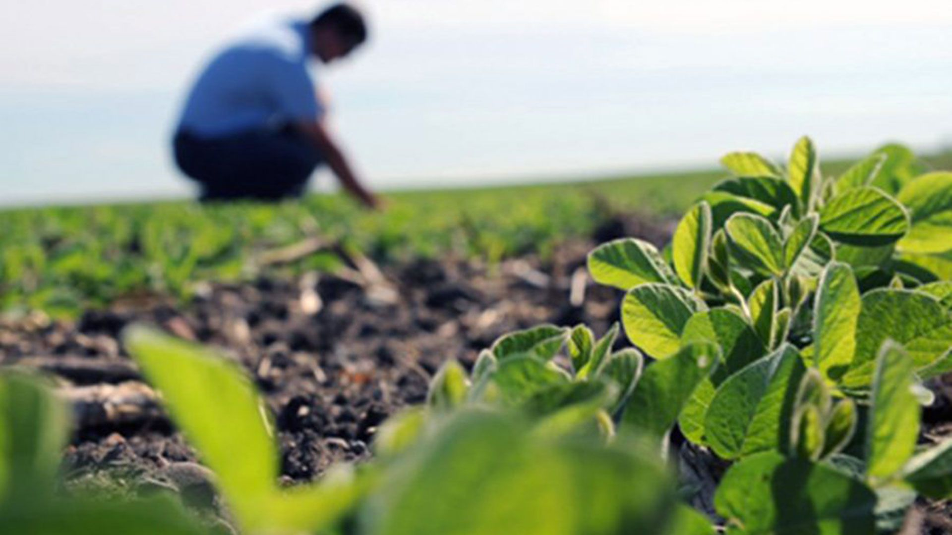 De Jujuy hasta Tierra del Fuego, profesionales de la agronomía reconocieron la preocupación social por el ambiente y la salud humana