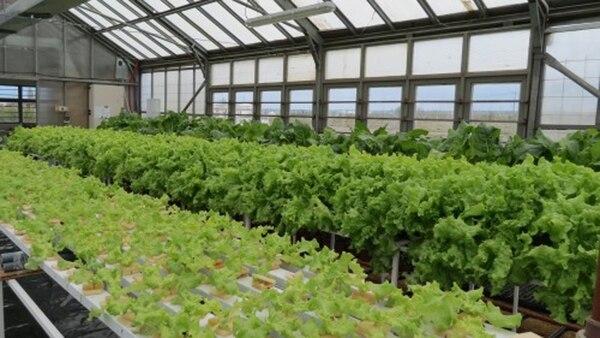 La técnica permite producir vegetales frescos y sanos, respetando y cuidando el ambiente