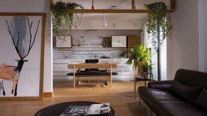 Las cinco plantas que permiten purifican el aire dentro del hogar según la Universidad Estatal de Nueva York