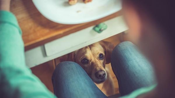 Hablo con mi perro: las expresiones y los movimientos a la hora de hablarles permiten entrever sus habilidades para entender lo que se les quiere comunicar (Getty images)
