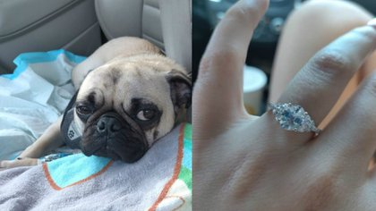 Patrick, el pug pudo haber muerto por tragarse el anillo de su dueña (Foto: especial)