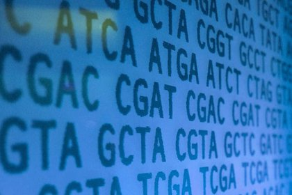 14/12/2018 Científicos han descubierto un conjunto de reglas simples que determinan la precisión de la edición del genoma CRISPR/Cas9 en células humanas SALUD INVESTIGACIÓN Y TECNOLOGÍA KATE WHITLEY