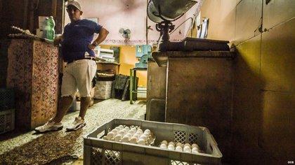 Gallinas recuperan producción de huevos