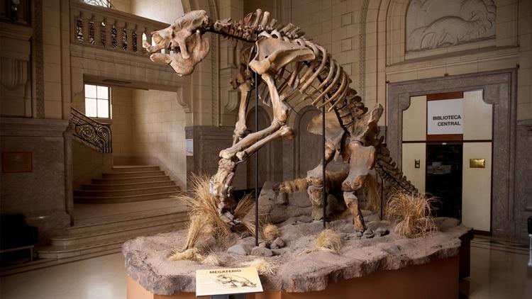 Esqueleto de un Megaterio, exhibido en el Museo Argentino de Ciencias Naturales (Conicet)