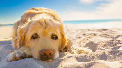 Los perros no deben estar mucho tiempo expuestos al sol (Shutterstock.com)