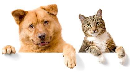 Los perros y los gatos comparten muchos aspectos en su salud; pero son buscados por las personas por sus características de ser más o menos independientes del humano (Shutterstock)