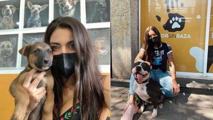 """""""A una influencer solo le pagan si muestra las nalgas"""": las fuertes declaraciones de Ferca tras no recibir apoyo para proteger animales"""
