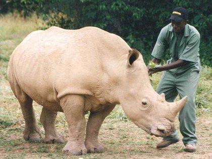 Soldadosarmados custodian 24 horas al día, los 3 ejemplares de rinocerontes blancos que aún sobreviven