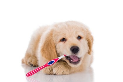 La higiene bucal es fundamental para mantener los caninos sanos, medio mediante el cual las mascotas ingieren los alimentos (Getty)
