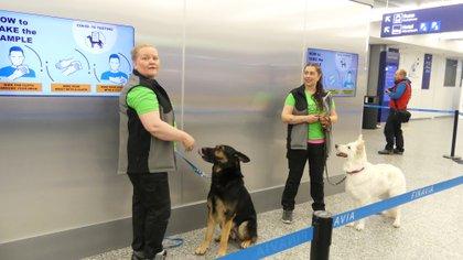 Perros detectores de coronavirus en el Aeropuerto de Helsinki en Vantaa, Finlandia REUTERS/Attila Cser