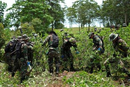 Militares durante tareas de erradicación de plantas de coca en la zona de Chimore, en el Chapare. REUTERS/David Mercado