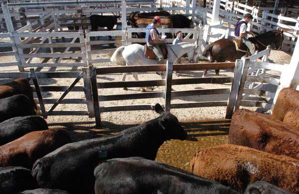 En el Mercado de Hacienda de Liniers se llegó a pagar más de 110 pesos por kilo de carne. (Télam)