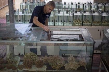 Maoz Fine, de la Universidad Bar-Ilan, es uno de los principales expertos del mundo en corales, y es coautor de este trabajo. (AP)