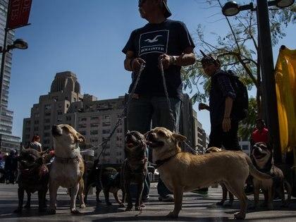 El INEGI estima que en México existen 18 millones de perros (Foto:ISAAC ESQUIVEL /CUARTOSCURO)