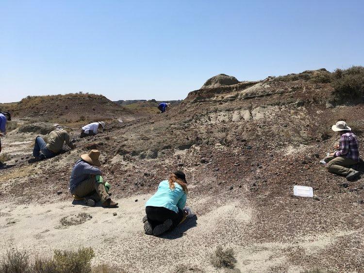 """El autor describió el descubrimiento como """"la preservación de un nuevo infierno""""(Foto: Hell Creek Fossils)"""