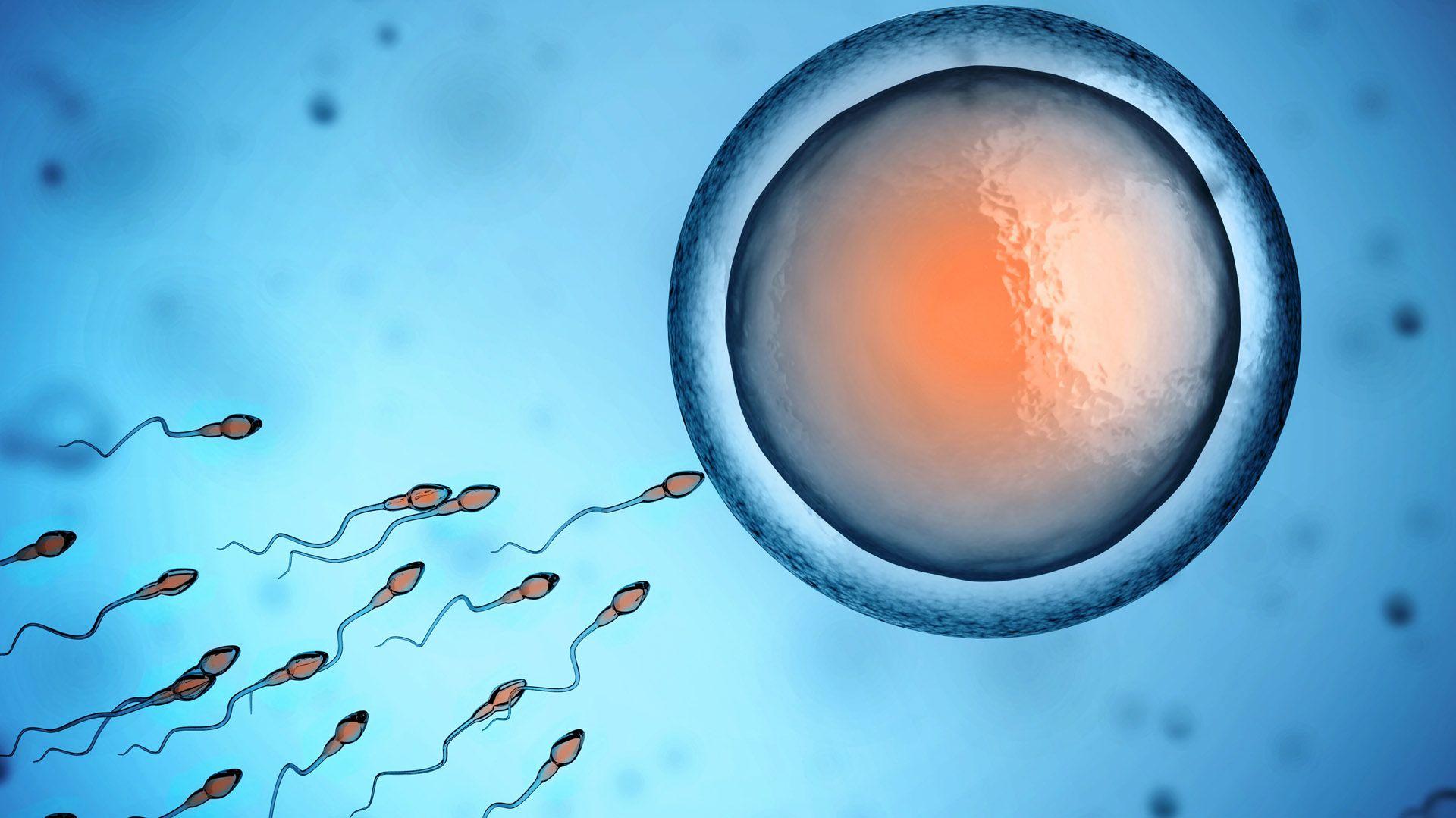 Las vacunas de Pfizer y Moderna aumentarían el nivel de esperma en hombres vacunados (Foto: Getty Images)