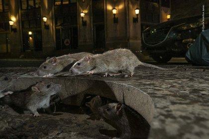 """The Rat Pack"", Charlie Hamilton James"