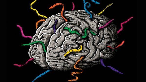 Gusanos en el cerebro: el peligro de comerse esas carnitas dudosas