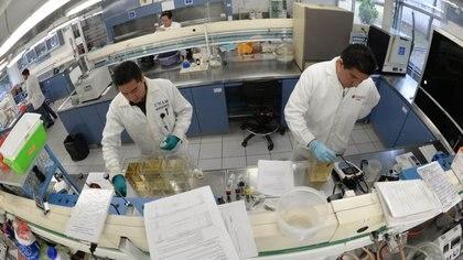 La Agencia Espacial Mexicana (AEM) y la Universidad Nacional Autónoma de México (UNAM) colaborarán en proyectos de microsatélites Foto: (UNAM)