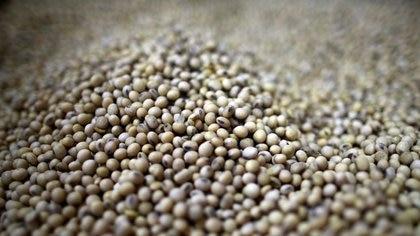 El precio internacional de la soja sigue operando en suba