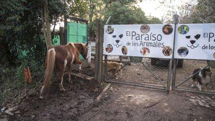 En El Paraíso de los Animales conviven especies en total libertad y ahora necesitan ayuda para construir un hospital veterinario (Guille Llamos)