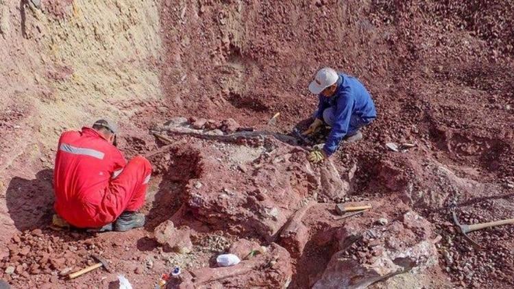 Un equipo internacional de paleontólogos descubrió los huesos en 2016 y hoy los presentaron en sociedad