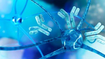 Los anticuerpos monoclonales son una opción terapéutica prometedora frente al nuevo coronavirus (Shutterstock)