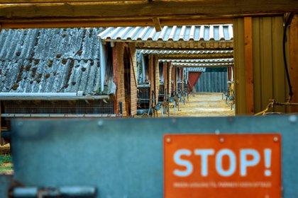 Granja de visones en Dinamarca. Shutterstock /  BigDane