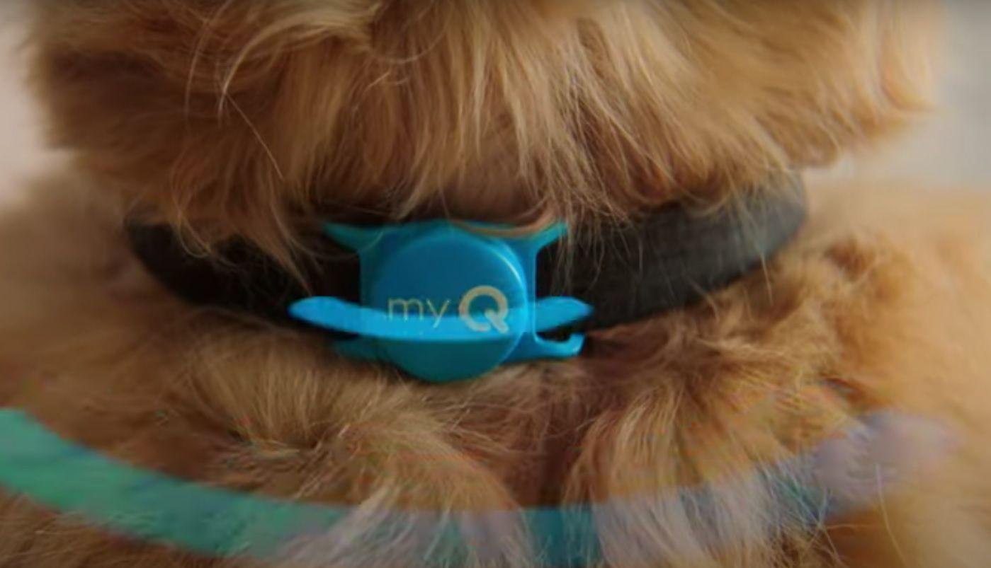 myQ Pet Portal CES 2021