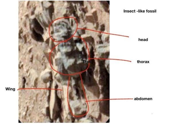 Una de la fotografías donde Romoser identificó una forma de vida similar a la de un insecto terrestre (Foto: Especial)