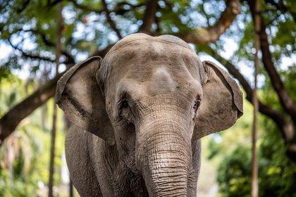 Mara dejará Argentina el próximo lunes 11 de mayo y el miércoles 13 llegará al Santuario de Elefantes de Brasil