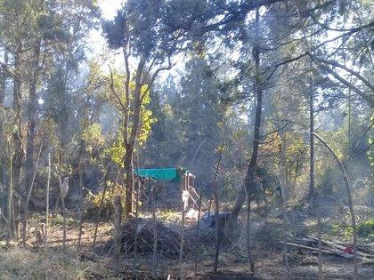 El área es un reserva forestal que protege un bosque nativo con árboles cipreses de hasta 120 años