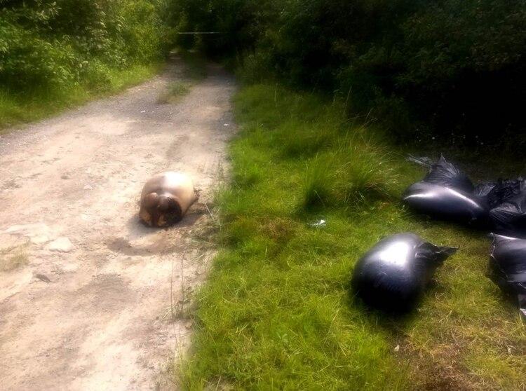 En la autopista Puebla-Veracruz fue que se encontraron los restos (Foto: Twitter)