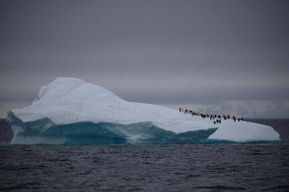 Un grupo de pigüinos camina sobre un iceberg que flota en el canal de Lemaire, en la Antártida (6 de febrero)