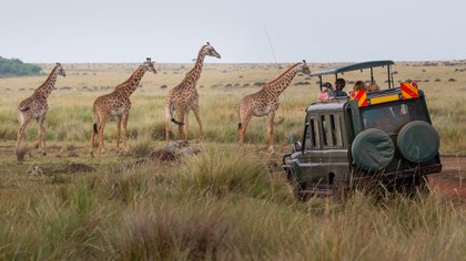 El Sistema de Lagos de Kenia en el Gran Valle del Rift es el mejor lugar para observar la vida silvestre, con guepardos, jirafas, rinocerontes negros y algunas de las diversidades de aves más complejas del mundo
