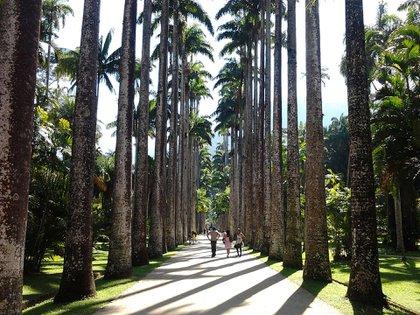 El jardín muestra más de 40 mil plantas, y unas 6725 especies diferentes. Es una de las mayores colecciones de plantas del mundo