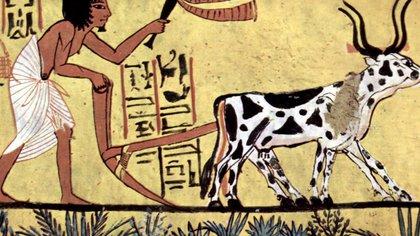 Registro egipcio del uso de animales para trabajo