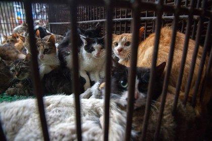 El estudio fue realizado con gatos en laboratorios (Reuters)