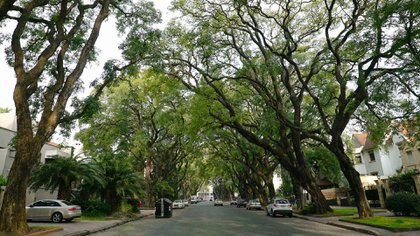 La vegetación también otorga un toque distintivo a los distintos barrios