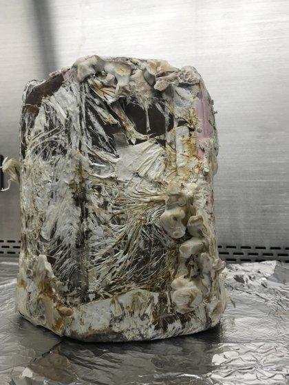 Un banco construido a base de micelios después de dos semanas de crecimiento. El paso siguiente es hornearlo (NASA).