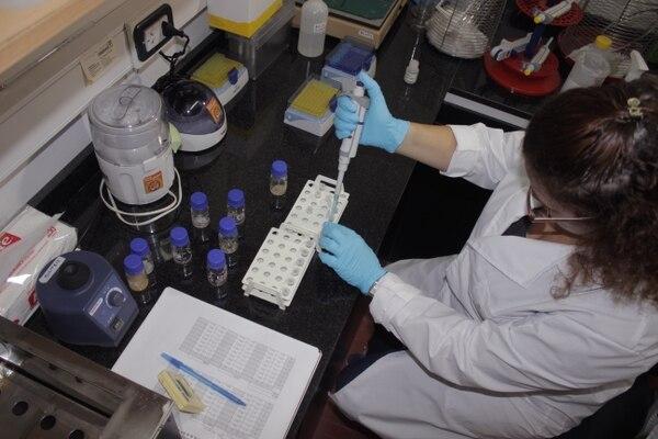 Los próximos pasos incluyen estudios en complejos laboratorios de Europa