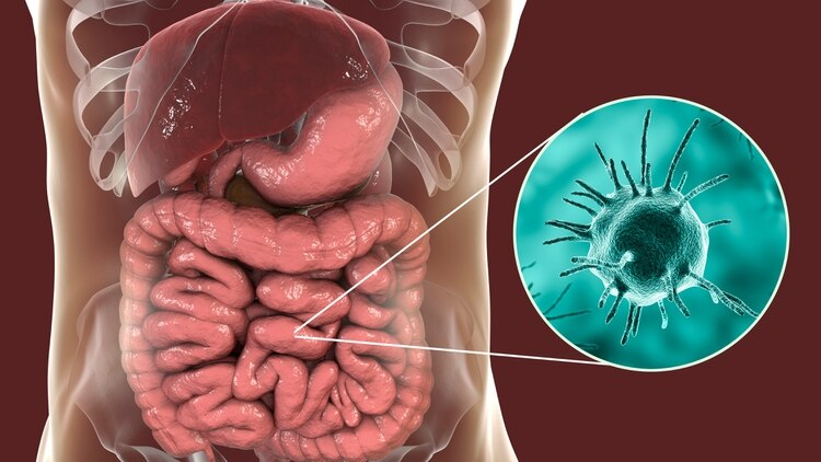 Científicos argentinos crearon el primer mapa de riesgo de infección por parásitos en el país (Shutterstock)