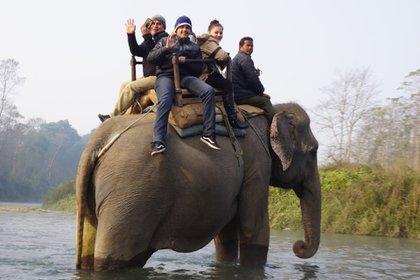 Paseos en elefante en Chitwan