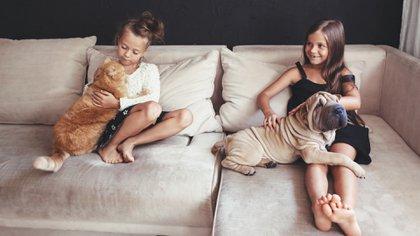Qué caracteriza a cada dueño (Shutterstock)