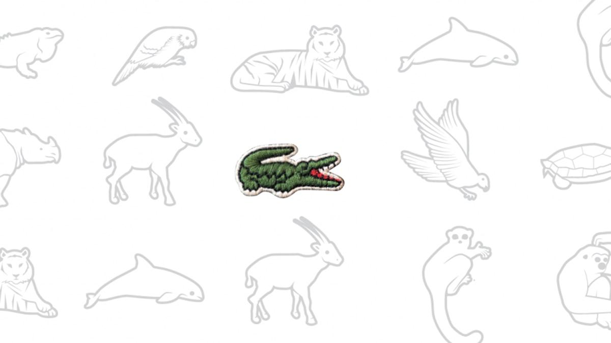76589af1551 Lacoste reemplazó a su icónico cocodrilo para concientizar sobre los  animales en vías de extinción - Infobae