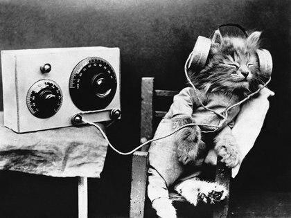 Investigadores han desarrollado música exclusivamente diseñada para la capacidad auditiva felina