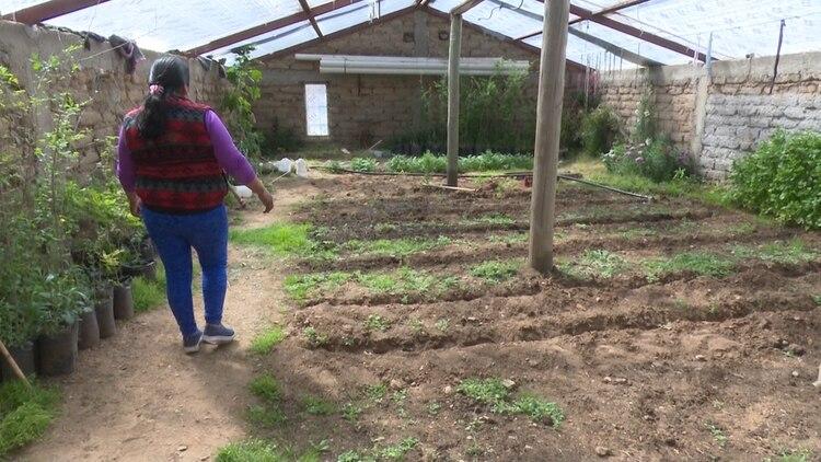 En la Puna, algunas comunidades construyen invernaderos para el cultivo de hortalizas y verduras con equipamientos de riego por goteo