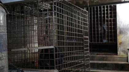 Two locked cages by Juan and Mo (FOUR PAWS)
